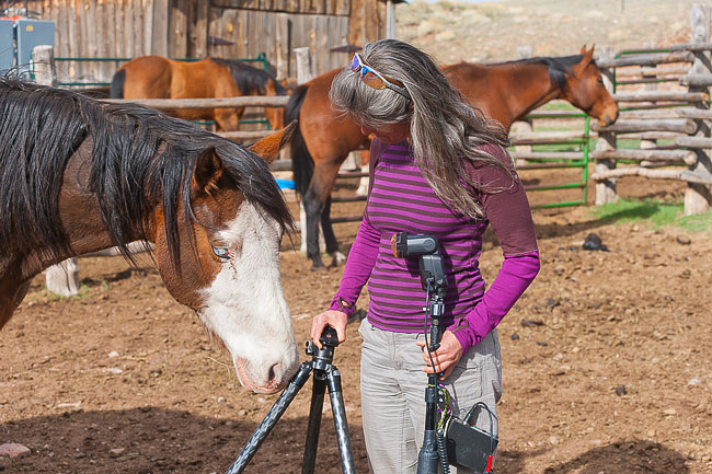 Horse sniffing photographer assistant's tripod