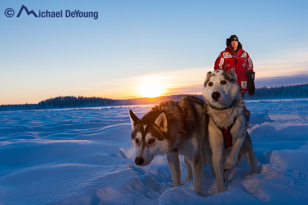 Dog musher at sunset near Willow, Alaska