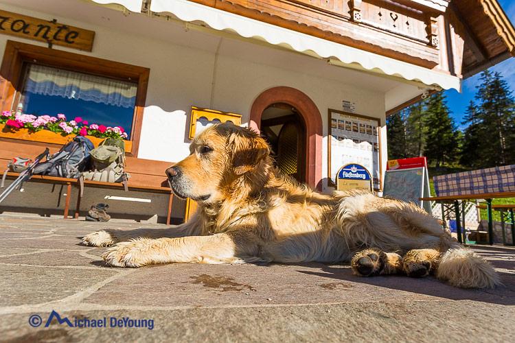 dog at Rifugio Stulanza, Dolomites