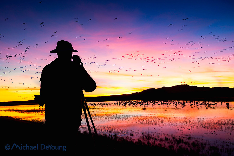 Editing a 2-day Shoot from Bosque del Apache National Wildlife Refuge in New Mexico.
