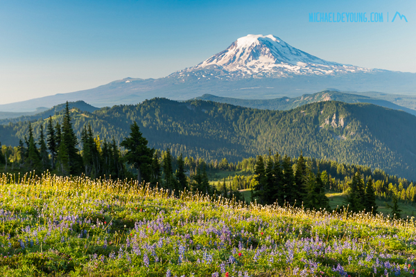 Wildflowers along the trail with towering Mount Adams, the 2nd tallest mountain in Washington State at 12,280'.