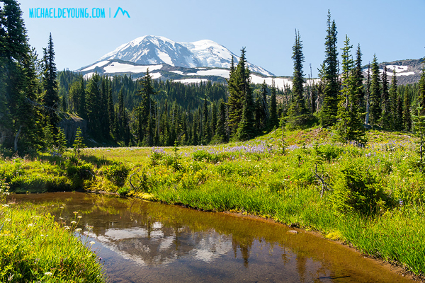 PCT in Mount Adams Wilderness, Washington