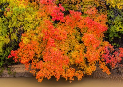 Fall-Colors-in-Zion-MD181028LUT_ZN003
