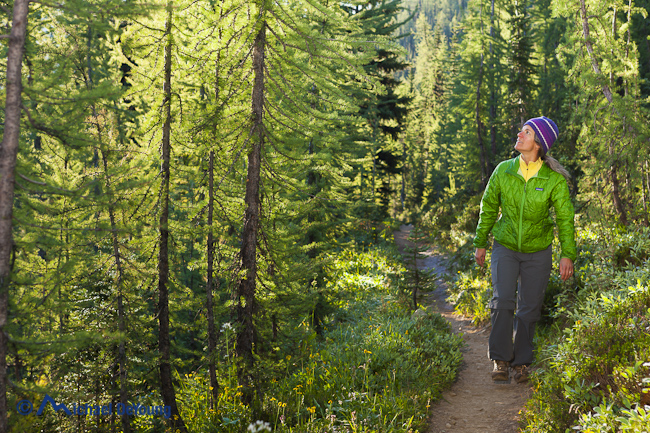 Image of woman walking among a tamarack forest, Pacific Crest Trail, Pasayten Wilderness, North Cascades, Washington - Michael_DeYoung_MD120908VWA_HB10