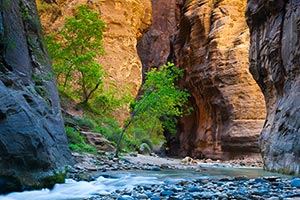 A section of The Narrows of the Virgin River - Zion National Park, Utah